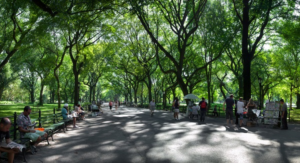 trees line and completely shade wide pathway through park
