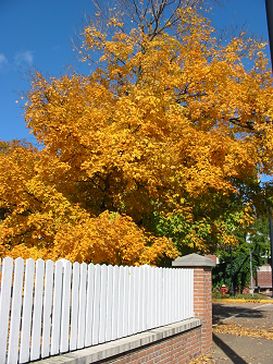 Autumn Newsletter Ideas to Perk Up Your E-Mails or Print
