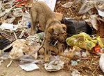 dog in open dump