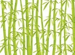 bamboo as symbol of a renewable wood