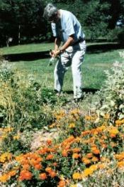 senior citizen volunteer caring for park garden area