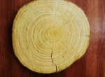 tree rings illustrate transect in nature
