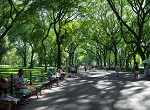 allee of shade trees
