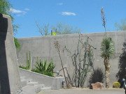 attractive desert plants