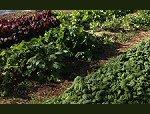 very healthy garden