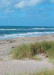 sandy beach and dune