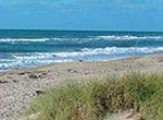 beautiful beach with sand and sea oats