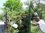 men closing a dumpster overflowing with excess vegetation and trash