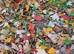 autumn leaves of every color on the ground