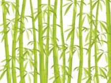 bamboo, a common element of green home construction
