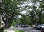 numerous cars visible in leafy residential street