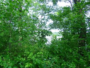 trees framing Missouri River