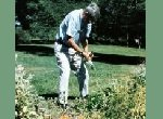 older man tending flower bed