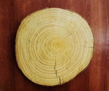 tree rings illustrating transect concept